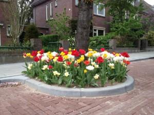 Boomspiegel_tulpen